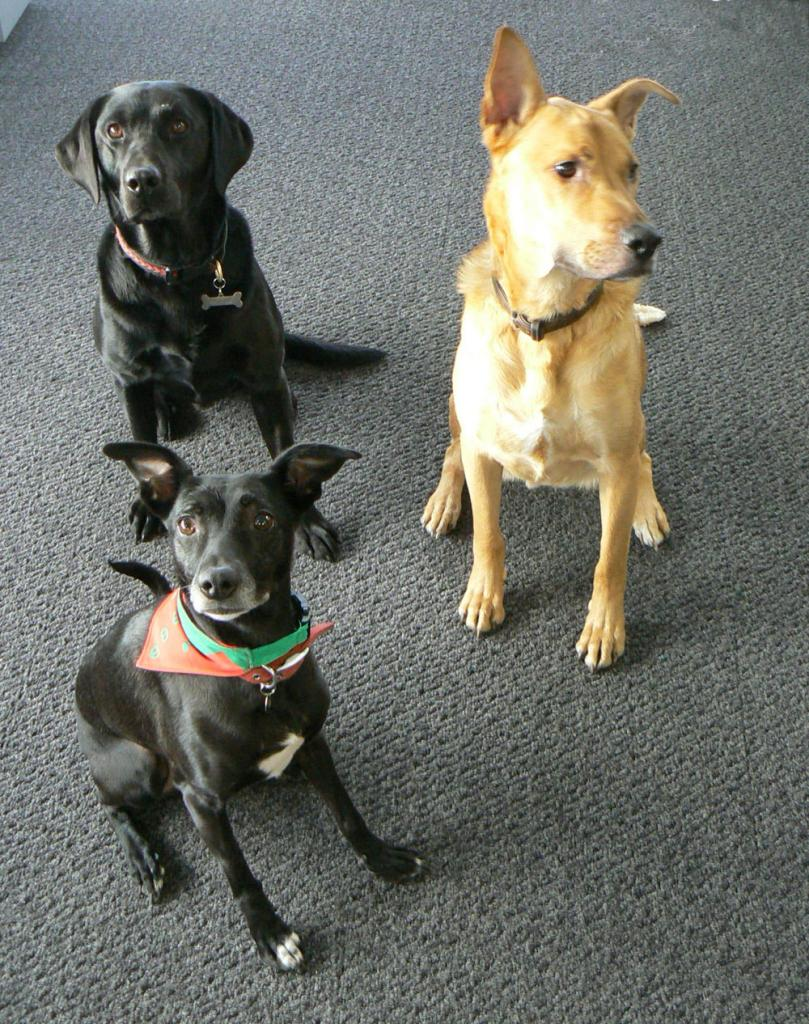 picture of Merlin, Ruby and Grogan